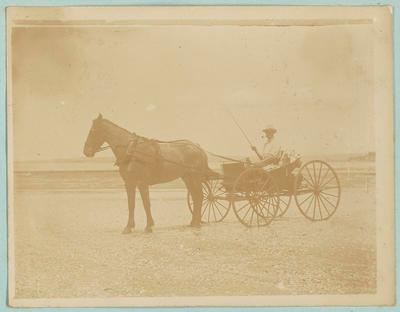 Photograph [horse and buggy]